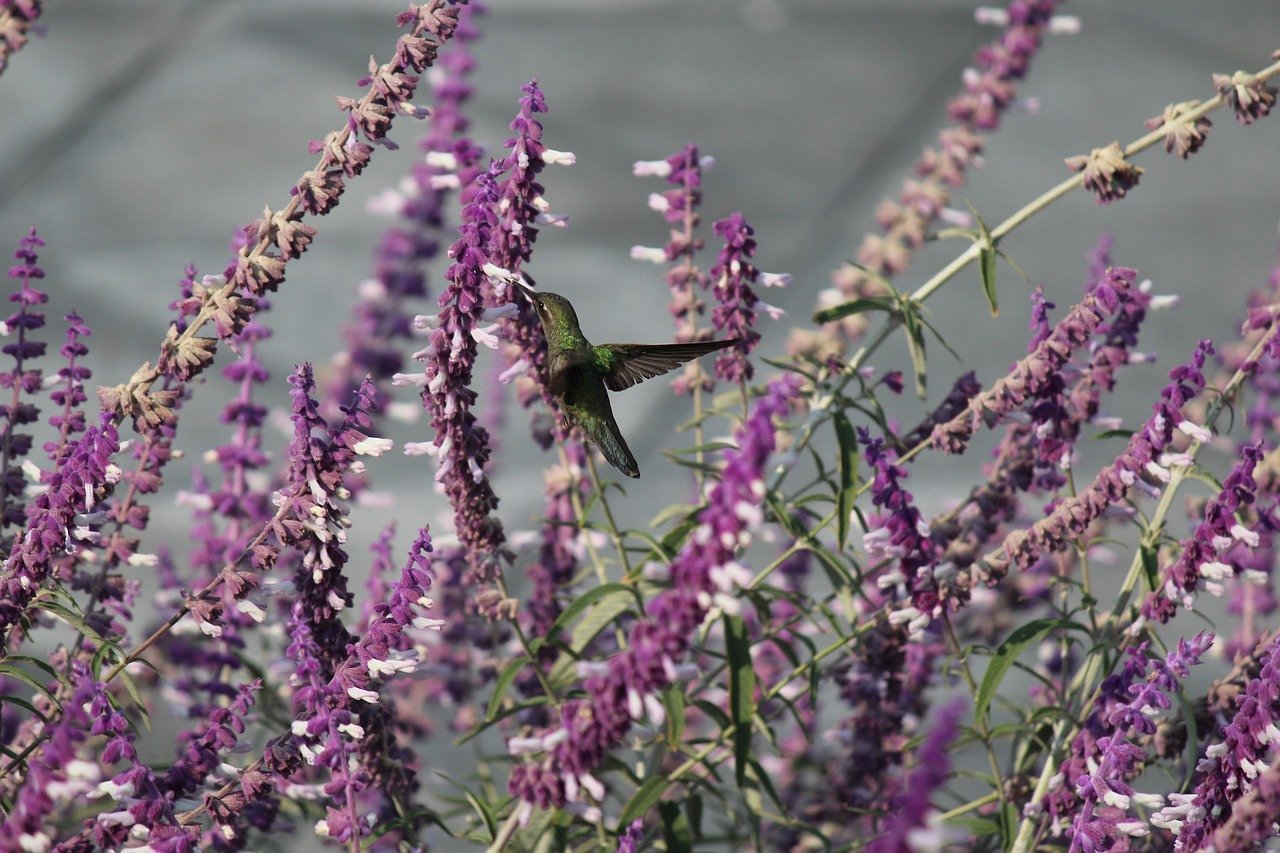 ave, hummingbird, nature