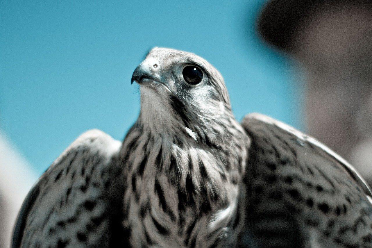 bird, wings, animal